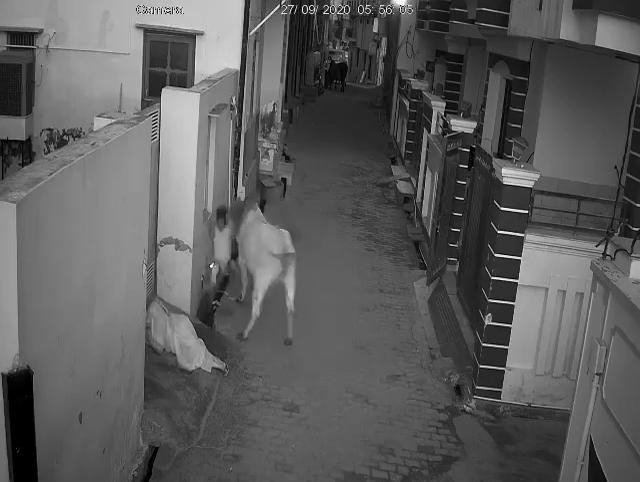 vlcsnap 2020 10 03 15h14m52s852 ষাঁড়ের আক্রমণ থেকে দিদাকে বাঁচাল নাতি, ভাইরাল ভিডিও